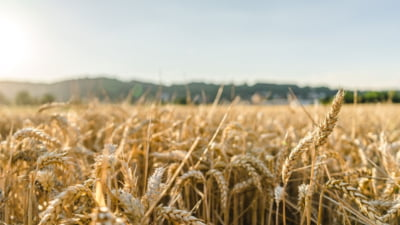 Țara care vrea să importe cantităţi mari de cereale din România
