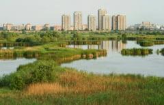 """""""Delta Vacaresti"""" avizata marti ca parc natural"""