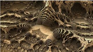 """Dragonii"" din Triassic aveau niste capete enorme. Acum s-a descoperit si de ce"