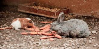 """""""Sa ne cunoastem mai bine!"""", program pentru cei mici, in vacanta de vara, la Zoo Targu Mures"""