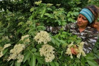 AFP: Socul contribuie la inflorirea economiei rurale a Romaniei