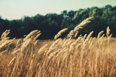 Buget 2016: Ministerul Agriculturii a refuzat fonduri suplimentare