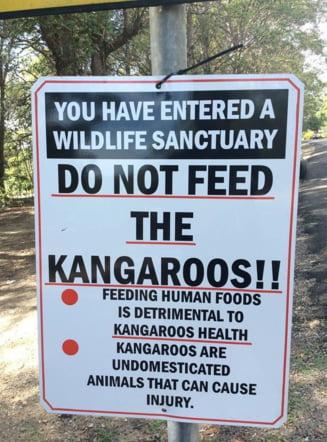 Clipul zilei: Nu mai hraniti cangurii ca va bat
