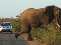 Clipul zilei: Un elefant a blocat traficul...isi facea exercitiile de dimineata