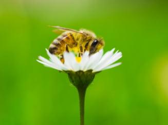 De la cititori: Foametea si albinele