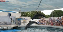 Fotografia zilei: Delfinul jucaus care inoata printre copii