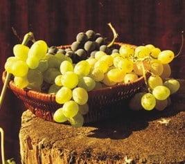 Fructele toamnei: Strugurii, fructele din Biblie
