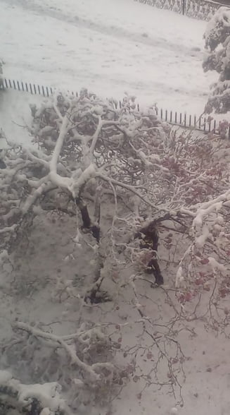 Iarna in plina primavara: Mii de copaci au fost doborati de zapada, doar intr-un oras. Vezi ce drumuri sunt inchise