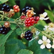 Idei de afaceri: Cum poti obtine 8.000 de euro pe an din cultivarea arbustilor fructiferi?