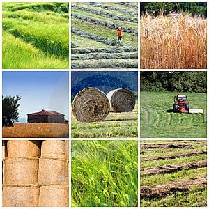 Idei de afaceri: Profit romanesc din ferme agricole de tip american