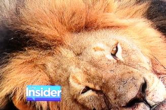 Leul Cecil, ucis: Prima punere sub acuzare. Dentistul american scapa basma curata?