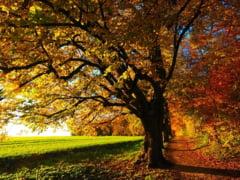 Meteo: Cald ca vara, in octombrie. Se anunta zile cu vreme excelenta
