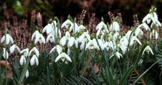Meteo: Duminica de Florii se anunta numai buna de picnic