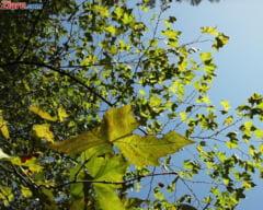 Meteo: E ultimul weekend din octombrie, dar soarele straluceste inca