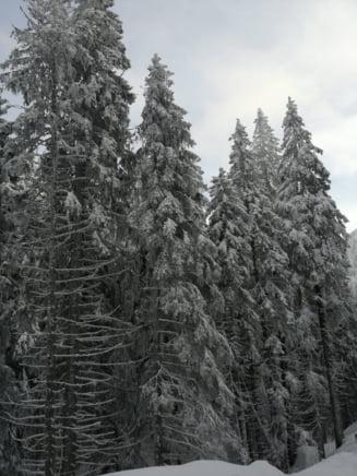Meteo: Ianuarie cu maxime de 11 grade
