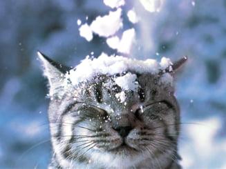 Meteo: Iarna isi reintra in drepturi - vezi cand vin zapezile