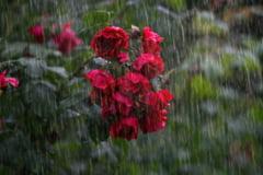 Meteo: Inceput de iunie cu vreme de toamna - temperaturi scazute si ploi