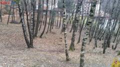 Meteo: Ne asteapta un weekend rece, cu minus 4 grade la Bucuresti
