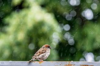 Meteo: Nu scapam de ploi nici in prima zi din iunie