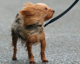 Meteo: Ploi si vant in rafale - cum va fi vremea in weekend