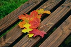 Meteo: Ploua peste tot. In jumatate de tara e neobisnuit de frig, in cealalta prea cald pentru octombrie