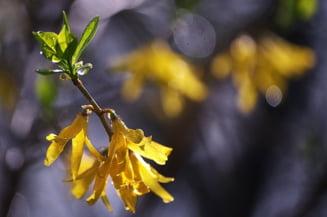 Meteo: Primavara cu ploi si vreme rece - prognoza pe doua saptamani