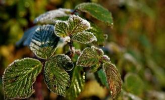 Meteo: Temperaturi in crestere, dar si multe averse
