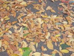 Meteo: Vineri si sambata cam ploua, iar duminica scad brusc temperaturile