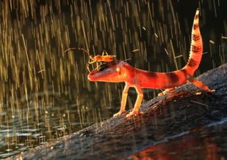 Meteo: Weekend cu ploi si temperaturi de vara