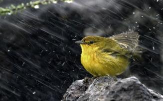 Meteo Inca o zi de ploi si vreme racoroasa