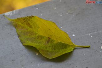 Prognoza meteo pe doua saptamani: Cum va fi vremea pana pe 9 octombrie