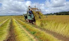 The Guardian: Fermierii tineri din Europa de Vest se muta in Romania