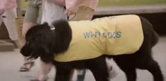 Viralul zilei: Cainii care cauta Wi-Fi in reclama Cosmote (Video)