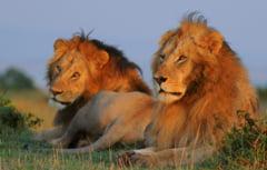 10 animale cu apucaturi gay (Galerie foto)