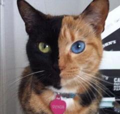 """10 animale in culori """"gresite"""" (Galerie foto)"""