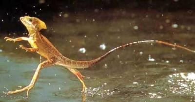 10 dintre cele mai ciudate creaturi din padurea tropicala amazoniana (Galerie foto)