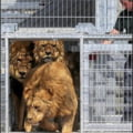 13 lei maltratati in Romania si-au gasit o noua locuinta in Marea Britanie