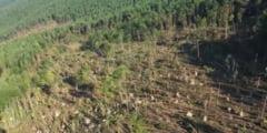 14 hectare de pădure puse la pământ de o furtună violentă în județul Suceava VIDEO