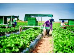 150 de locuri disponibile in agricultura spaniola