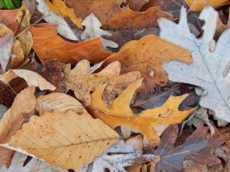 16 grade la mijloc de decembrie, cu mult mai cald decat in mod normal - prognoza meteo pe doua saptamani