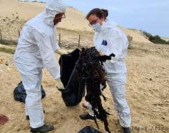 16 kilograme de plastic, descoperite in stomacul unei balene cu cioc esuata pe litoralul din Landes, Franta