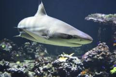 17 specii de rechini, pe cale de disparitie