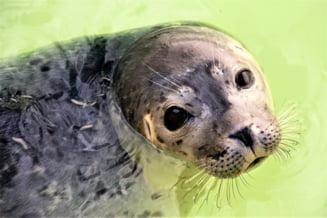 18.000 de euro recompensă pentru găsirea ucigașului lui Kostis, foca-mascotă a insulei grecești Alonissos