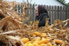 2015, an dificil pentru agricultura vasluiana
