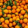 21.230 kg portocale cu acte false