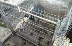 25 de caini din rasa Metis tinuti in conditii insalubre. Ingrijitorii s-au ales cu dosar penal