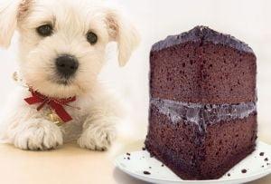 8 alimente pe care animalul tau nu ar trebui sa le manance niciodata