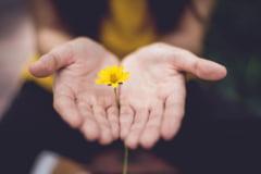8 ingrediente naturiste eficiente pentru hidratarea pielii uscate a mainilor