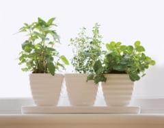 9 plante curative pe care sa le folosesti imediat