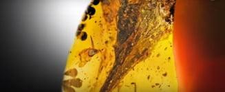 A fost descoperit craniul celui mai mic dinozaur: e conservat perfect intr-un chihlimbar (Video)